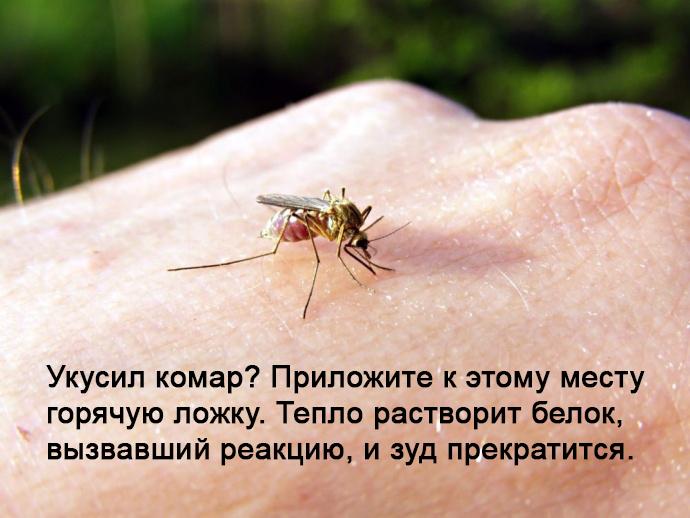 Лайфхак - избавление от зуда после комариного укуса